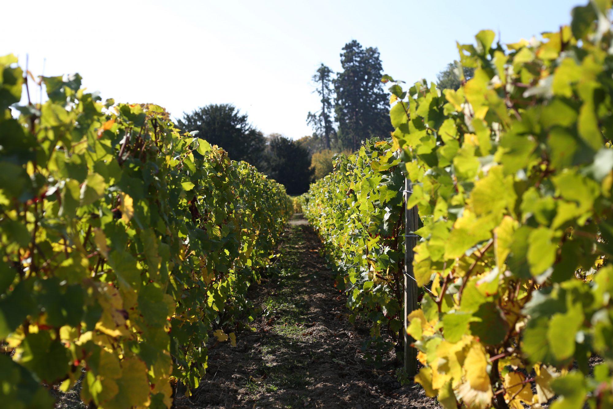 gutes Weinjahr